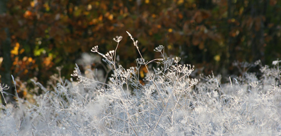 Foto, Frostgräs
